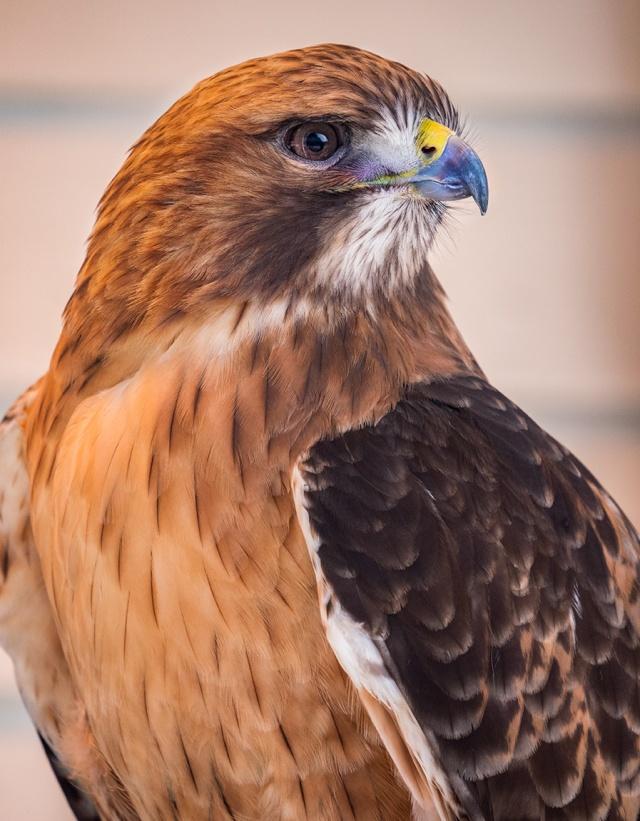 100-400mm Hawk